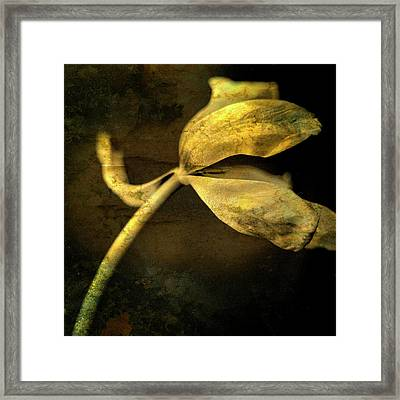 Yellow Tulip Framed Print by Bernard Jaubert