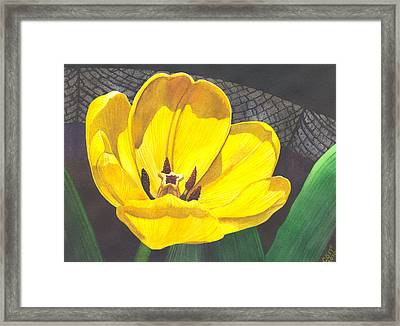 Yellow Tulip Framed Print by Catherine G McElroy