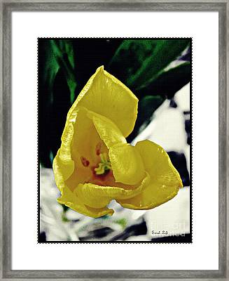 Yellow Tulip Floating In Air Framed Print