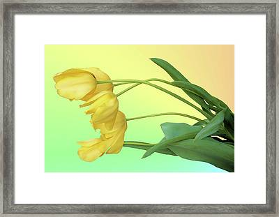Yellow Tulip Pastel Framed Print