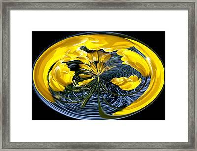 Yellow Tulip Framed Print by Robert  McCord