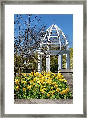 Yellow Tulips And Gazebo Framed Print by Tom Mc Nemar