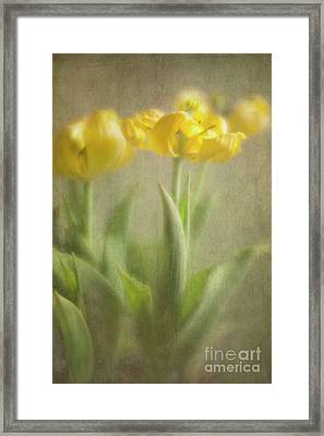 Framed Print featuring the photograph Yellow Tulips by Elena Nosyreva