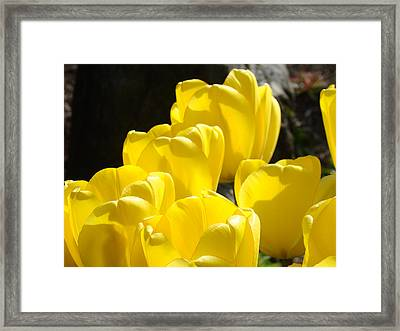 Yellow Tulips Floral Art Prints Nature Garden Framed Print by Baslee Troutman