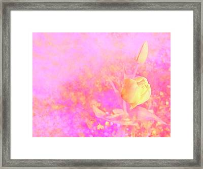 Yellow Tulips Framed Print by Nat Air Craft