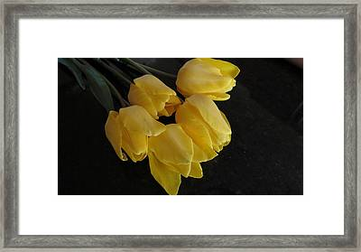 Yellow Tulips With A Dark Background Framed Print