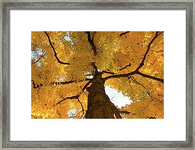 Yellow Up Framed Print