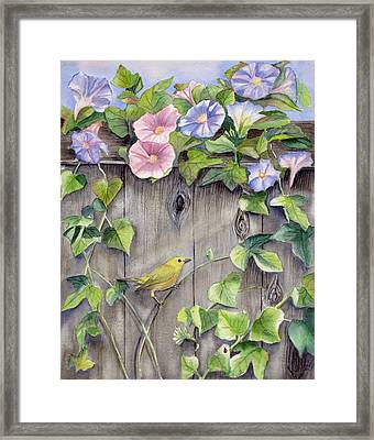Yellow Warbler And Morning Glory Framed Print by Patricia Pushaw