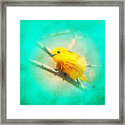 Framed Print featuring the photograph Yellow Warbler by John Wills