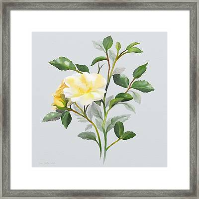 Yellow Watercolor Rose Framed Print