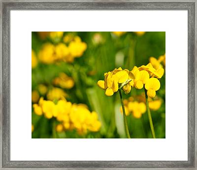 Yellow Wild Flowers Framed Print by Edward Myers