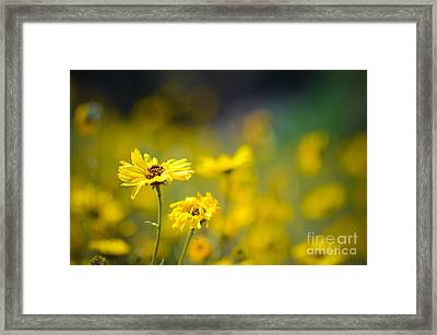 Framed Print featuring the photograph Yellow Wild Flowers by Kelly Wade