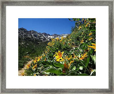 Yellow Wildflowers Framed Print by Alan Socolik