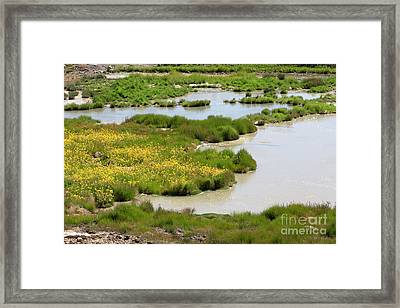 Yellow Wildflowers At Mud Volcano Area In Yellowstone National Park Framed Print by Louise Heusinkveld