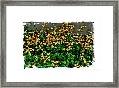Yellow Wildflowers Framed Print by Marsha Heiken