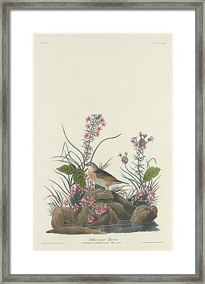 Yellow-winged Sparrow Framed Print