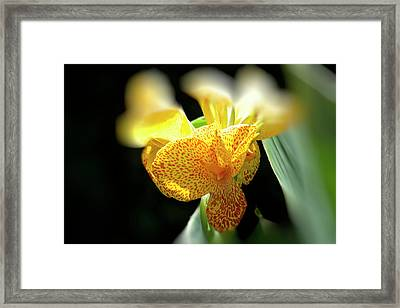 Yellow With Red Spots Framed Print