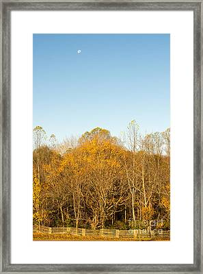 Yellow Yellow Everywhere - Natchez Trace Framed Print by Debra Martz