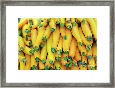 Yellow Zucchini Framed Print