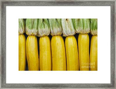 Yellow Zucchini Framed Print by Tim Gainey