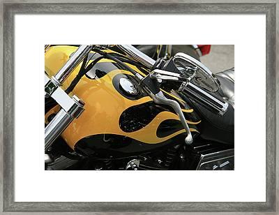 Yellowjacket Framed Print