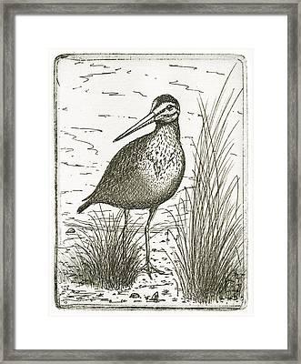Yellowlegs Shorebird Framed Print by Charles Harden