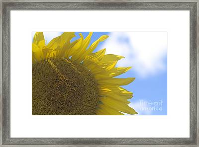 Yellowness Creates Happyness  Framed Print