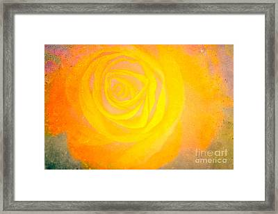 Yelloworange Rose Framed Print