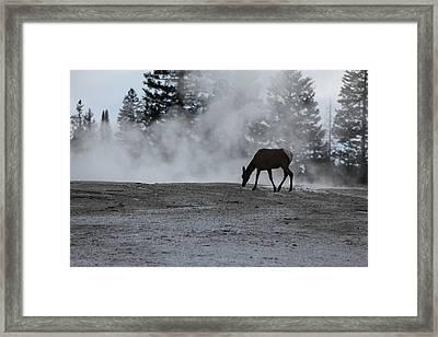 Yellowstone 5456 Framed Print