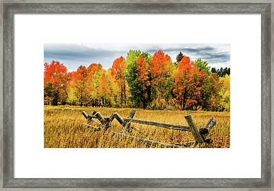 Yellowstone Autumn Framed Print by TL Mair