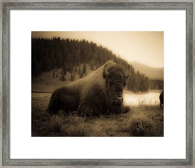 Yellowstone Bison 2 Framed Print by Patrick  Flynn