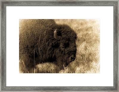 Yellowstone Bison Framed Print by Patrick  Flynn