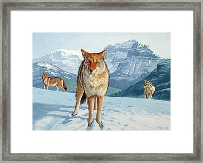 Yellowstone Coyotes Framed Print