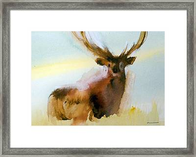 Yellowstone  Elk Framed Print