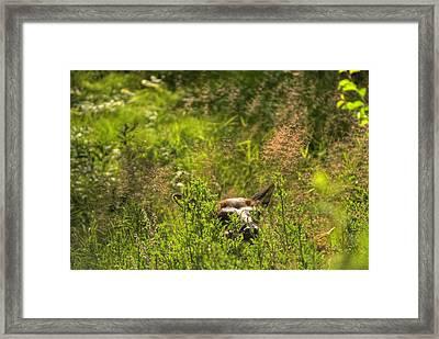Yellowstone Elk Framed Print by Patrick  Flynn