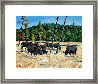 Yellowstone Grazers Framed Print