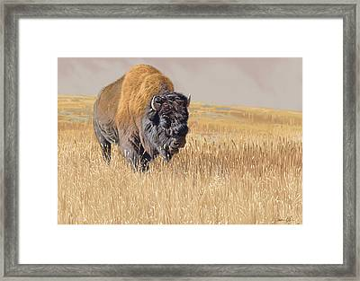 Yellowstone King Framed Print