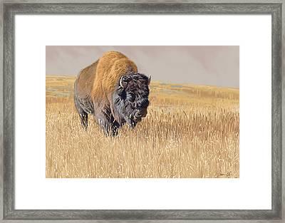 Yellowstone King Framed Print