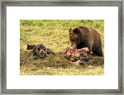 Yellowstone Lifecycle Framed Print