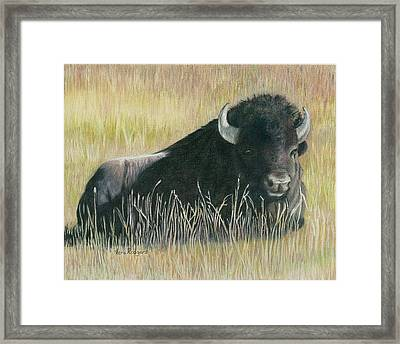 Yellowstone Loner Framed Print by Vera Rodgers