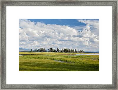 Yellowstone Meadow Framed Print