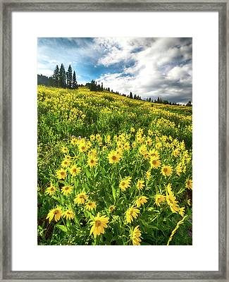 Yellowstone Yellow Framed Print