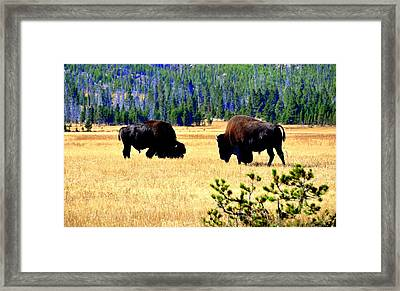 Yellowstonepark Framed Print by Aron Chervin
