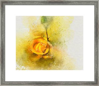 Yelow Rose Framed Print