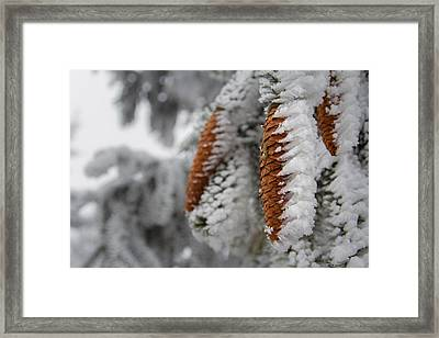 Yep, It's Winter Framed Print
