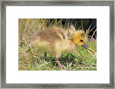 Yes I Do Have Wings Framed Print by Donna Kennedy