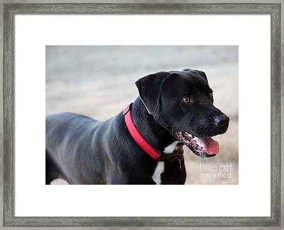 Yes I Want To Play Framed Print by Amanda Barcon