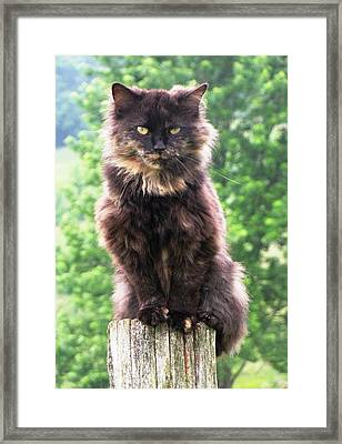 Yes I'm The Queen Framed Print