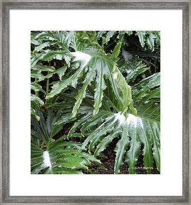 Yes Snow In Florida Framed Print