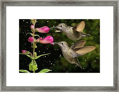 Framed Print featuring the photograph Yes We Are Twins by William Lee